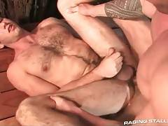 Sexy hairy guy gets his butt hole penetrates by horny bull.