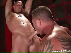 Muscled tattooed Charlie Harding slurps Caleb Colton`s shaft.