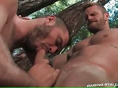 Horny bear gets his craving asshole fucked in forest.